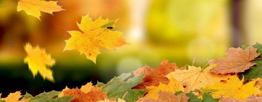 Тема недели — Растения осенью.  Грибы, ягоды
